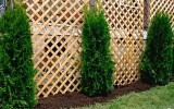 <b>8 Fast Growing Evergreens Trees We Should Know</b>