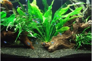 Freshwater Aquarium Design Ideas it will be always freshwater more nature aquariumplanted aquariumaquarium designaquarium ideasaquarium Freshwater Aquarium Design Ideas