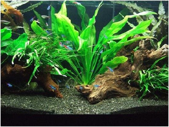 9 ideas to decorate fish tanks