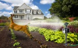 <b>Tips For Keeping Deer Out Of Garden</b>