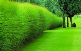 <b>Tips To Landscaping With Ornamental Grass</b>
