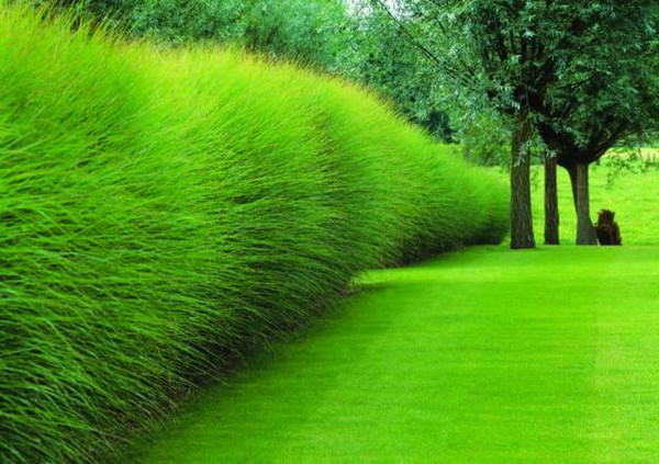 Tips to landscaping with ornamental grass for Tall grass border