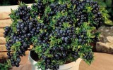 <b>7 Things We Should Know Before Raising Blueberries</b>