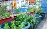 <b>Tips To Care Indoor Fruit Trees</b>