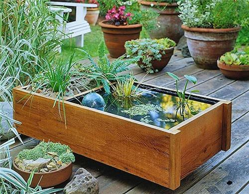 Container Water Garden Supplies
