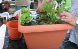 <b>Tips To Plant On Water Garden Containers</b>