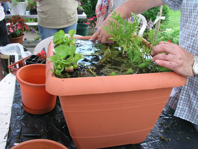 Water Garden Containers For Sale