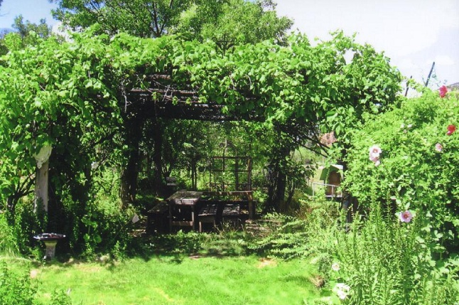 How To Build A Grape Arbor
