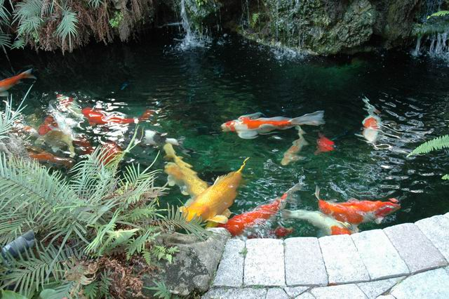Koi fish ponds designs for Koi pond design pictures