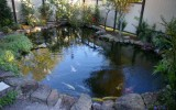 <b>Tips To Create Koi Fish Ponds</b>