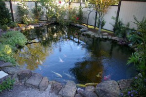 Koi Fish Ponds Pictures