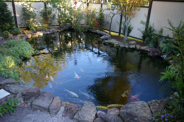 Tips to create koi fish ponds for Koi pond builders near me