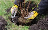 <b>Tips To Secure Your Garden Plants</b>