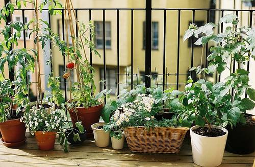 Vegetable Terrace Garden
