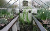 <b>3 Benefits Of Small Glass House On Garden</b>