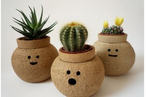 Creative Indoor Planter Ideas