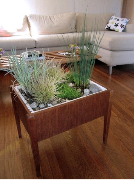 Indoor Planter Ideas