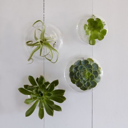 Indoor Wall Planters