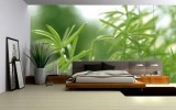 <b>Master Bedrooms with Green Walls with the Freshness and Nature Looks</b>